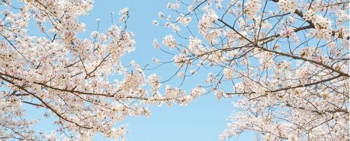 将棋地口・第9笑 『辛抱する木に花が咲く』