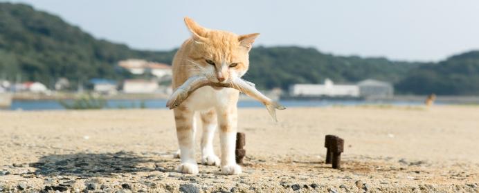将棋地口・第18笑(最終笑) 『取るに取られぬ魚屋の猫』