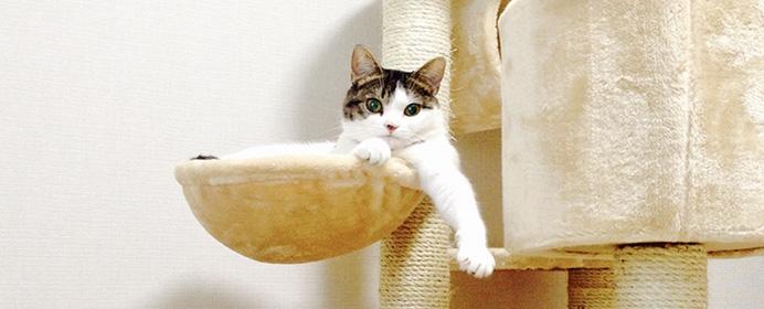 私の猫ライフ――村田智穂女流二段